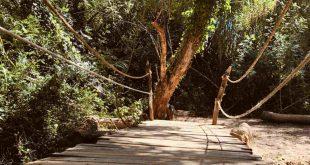 Imagen del puente hacia 'El Bosque Sonoro, en la localidad zaragozana de Mozota.