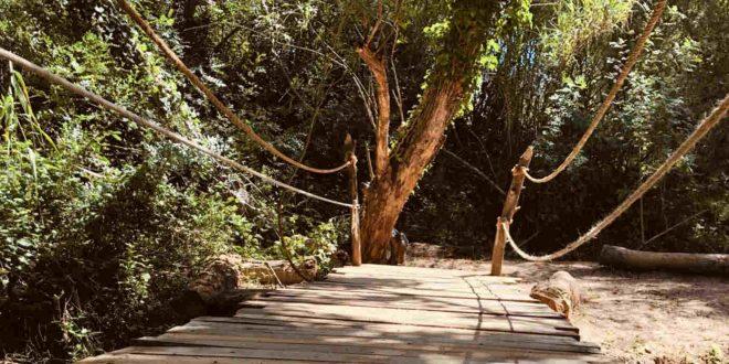 Primer artista desvelado para El Bosque Sonoro de Mozota de 2021