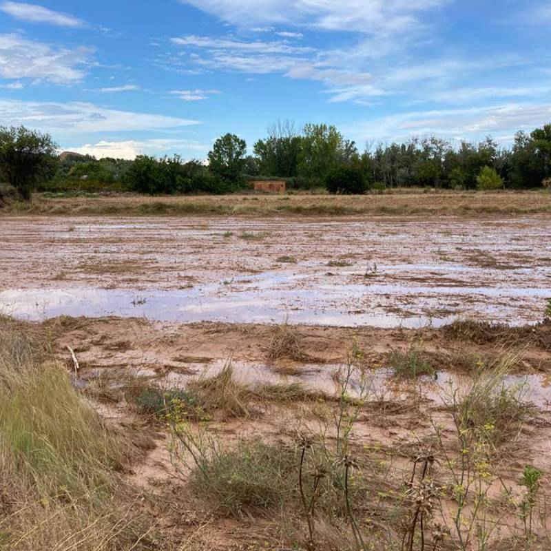 Foto de la situación actual del recinto de El Bosque Sonoro